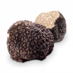 Fresh Truffle from the Périgord region